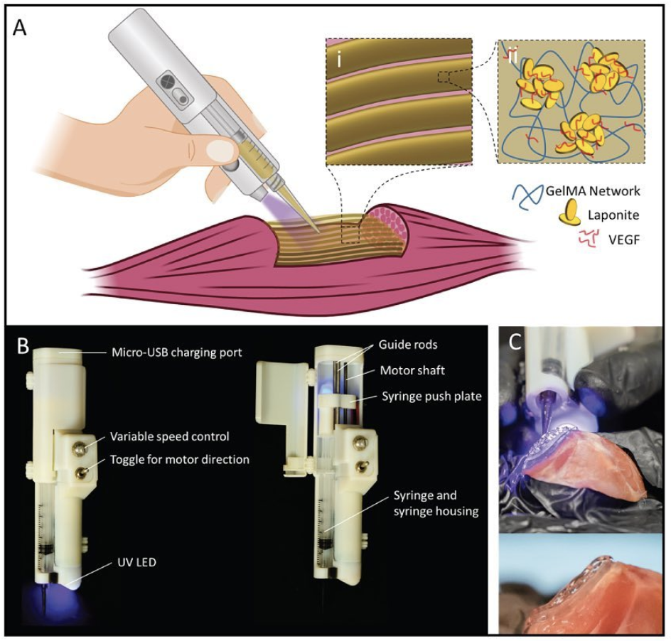 In Vivo Printing Of Nanoenabled Scaffolds For The Treatment Of Skeletal Muscle Injuries